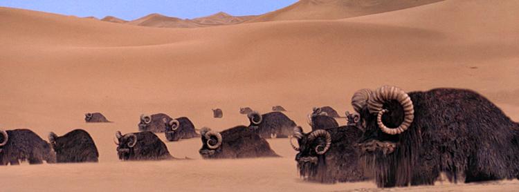 Bantha Star Wars