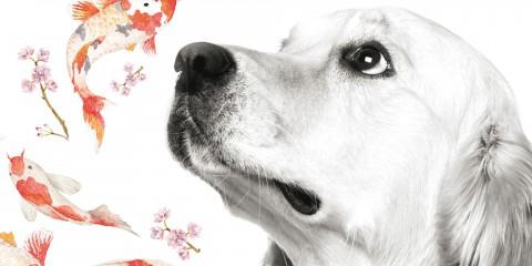 Un gos Alejandro Palomas Columna Destino