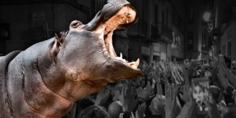 Hipopotamos Teatre Gaudí